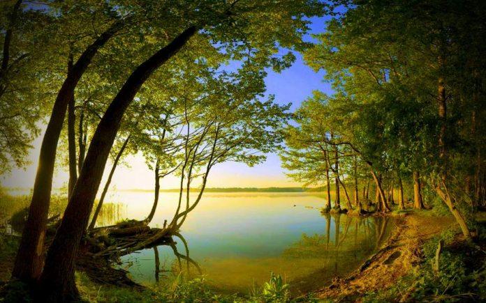 ağaç göl