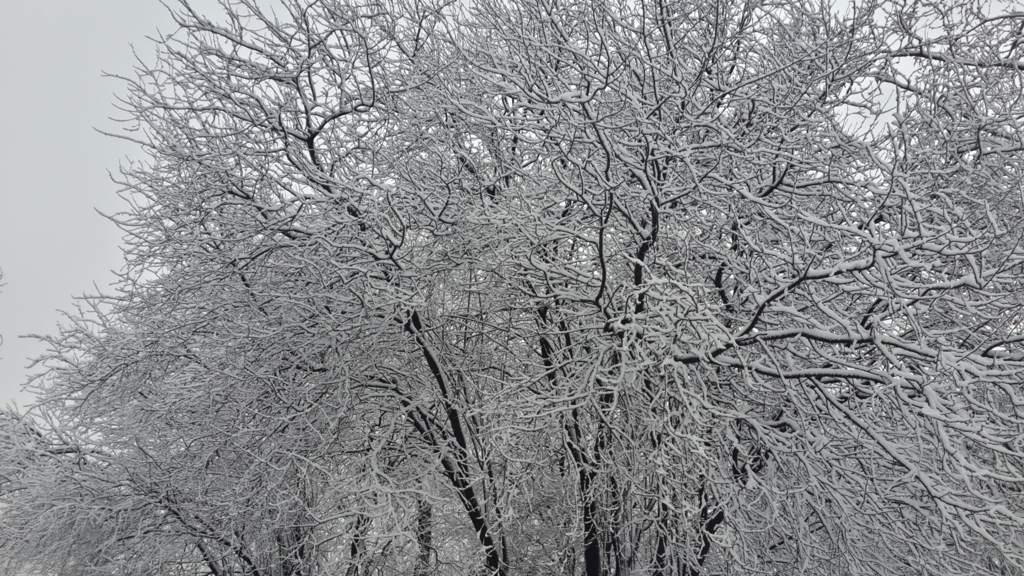Ankara'da kış güzelliği